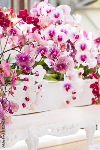 Arrangement colorful moth orchids