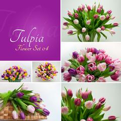 Tulpia Flower Set 04