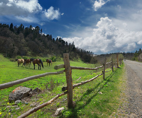 Horses in the mountains and the fence