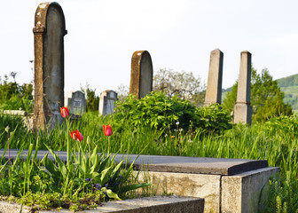 Countryside cemetery with red tulips