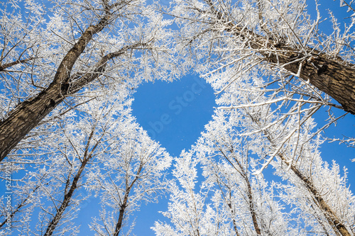 Winter landscape,branches form a heart-shaped pattern