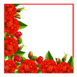 Valentine background with red roses