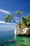 Famous beautiful rock with pine trees in Brela in Croatia