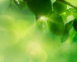Spring apple leaf background