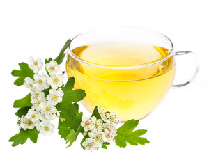 Weißdorn (crataegus monogyna) - Tee mit Blüten und Blättern