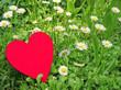 Herz in Gänseblümchenwiese