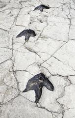 Prehistoric dinosaur footprints