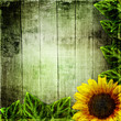 green leaves frame and sunflower  on wooden background