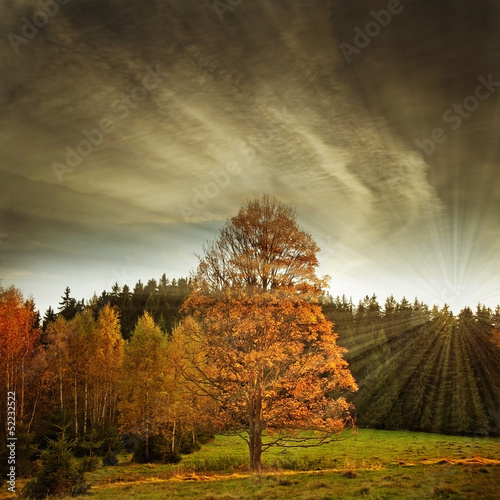 Fototapeta fall landscape with sunset