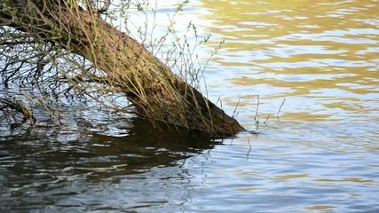 Baum bei Hochwasser unter Wasser