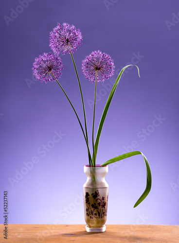 Violet Garlic Flowers in vase