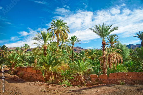 Oasis with palm trees in the middle of the desert