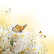 White irises against a green grass, a summer butterfly