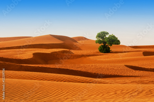 canvas print picture Desert of North Africa, sandy barkhans