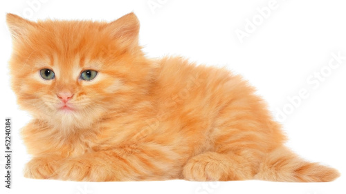 Orange kitten lays on a side view isolated