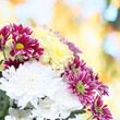 Bouquet of beautiful chrysanthemums on bright background
