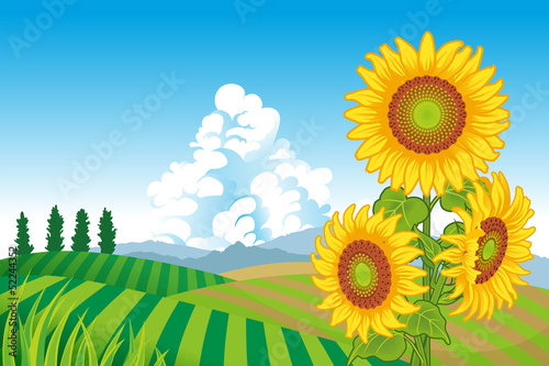 Sunflowers in Rural Scene