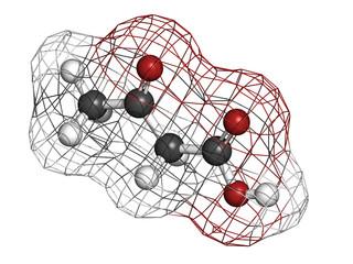 Ketone body (acetoacetic acid), molecular model