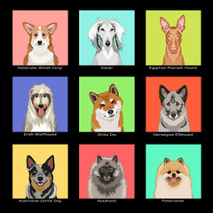 The Dog Collection 05