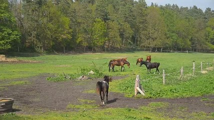 Au der Pferdekoppel