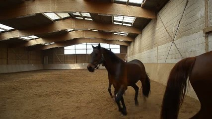 Pferde zur Ausbildung in der Reithalle