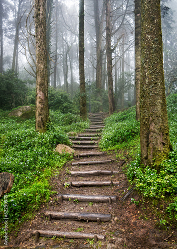 Wall mural Forest path