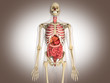 3D Rendering Intestinal internal organ