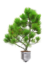 pine growing from the base of the light bulb