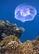 Leinwanddruck Bild - Landscape under water