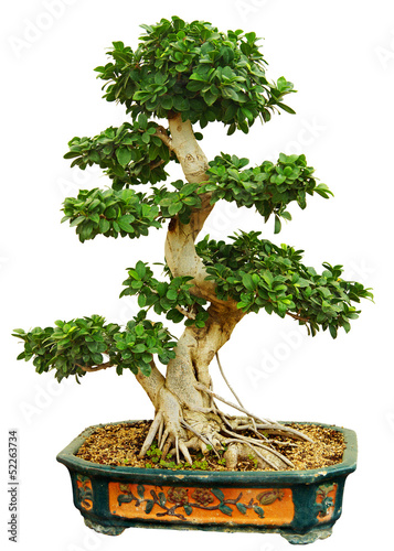 Foto op Canvas Bonsai bonzaï
