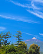 Northern  Tenerife, view over tree tops towards Teide