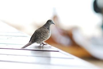 oiseau mauricien