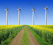 rapeseed field with wind turbines against the blue sky