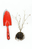 garden shovel and dry tree