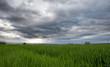 Wheat field and storm clouds in rural Geneva, Switzerland