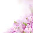Floral border, summer blossom background