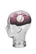 Baseball Brain.