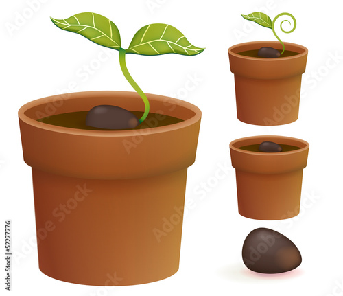 Plant Life Cycle - Vector File EPS10