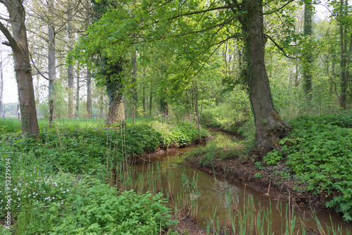 Stream meandering through meadow and forest