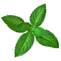 Fresh mint leaves isolated on white background. Studio macro..