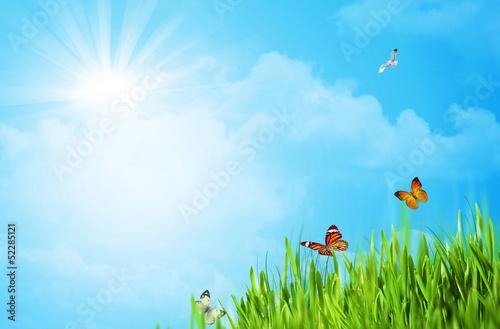 Fototapeten,foliage,himmel,gras,blau