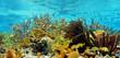 colorful caribbean reef
