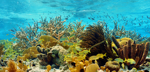 colorful caribbean reef