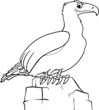 cartoon eagle for coloring book