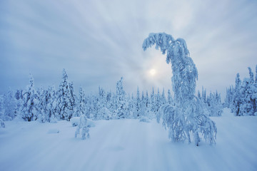 Stunning Lapland wilderness in winter
