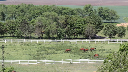 herd of horses in corral aerial view