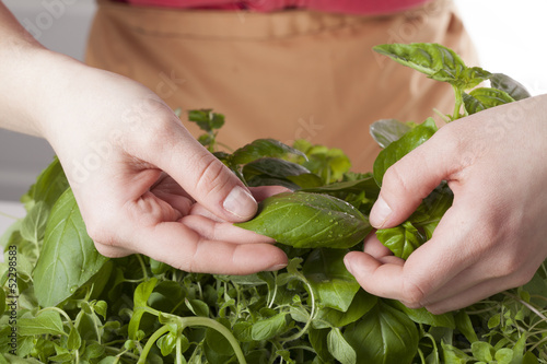 Collecting basil