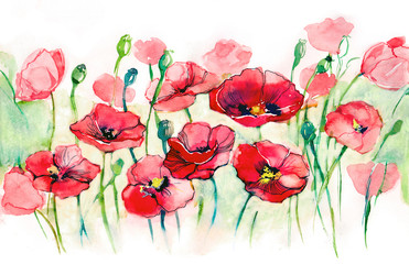 poppies horizontal