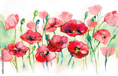 poppies horizontal