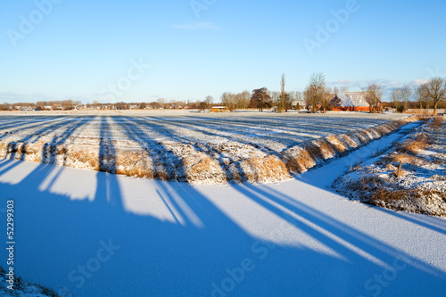 striped shadows on winter Dutch farmland